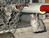 Young, gray, pregotten cats living in the basement, looking with fear and hope in their eyes