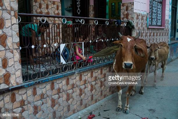 A young Indian boy hits a cow with a broomstick as he sits on the balcony of his house in Kekri some 78 kms south of Ajmer on May 13 in the northern...