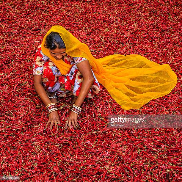 Young Indian woman sorting red chilli peppers, Jodhpur, India