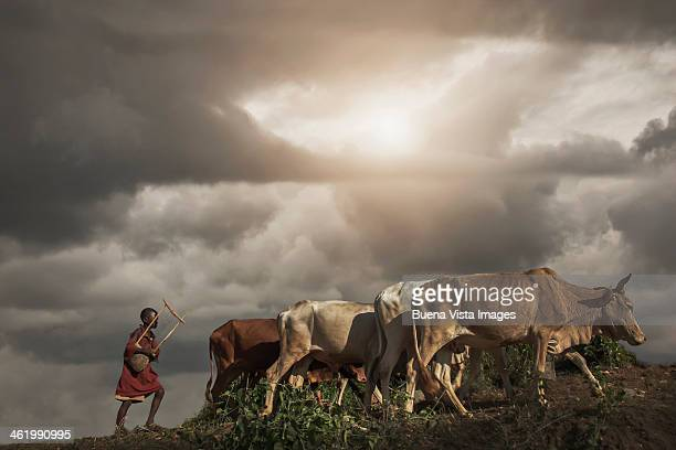 Young Karo Tribe boy with cows
