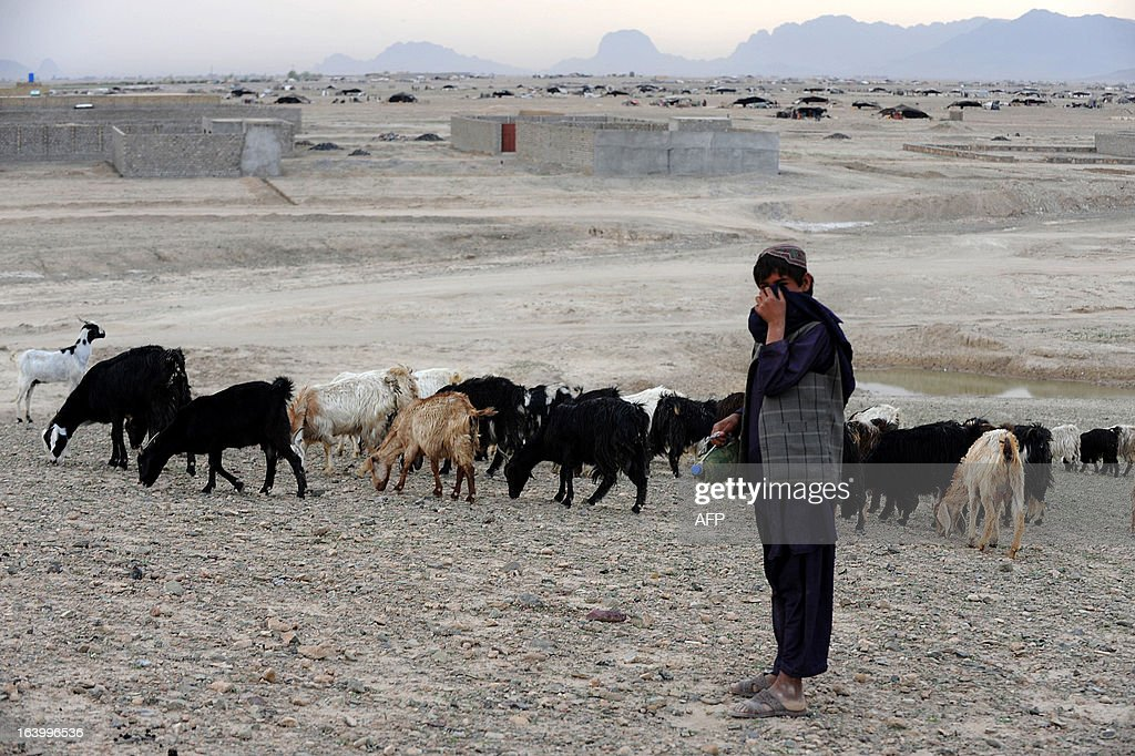 A young Kuchi - nomad - man keeps an eye on his goats on the outskirts of Kandahar on March 19, 2013. Afghanistan is having trouble keeping hard-earned development gains due to looming security challenges when NATO military forces withdraw in 2014, an internal World Bank audit said.