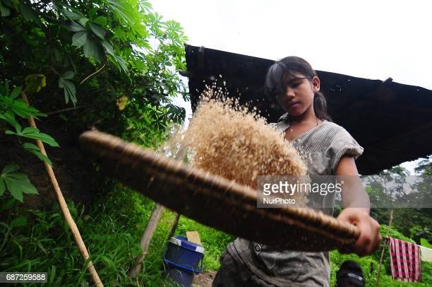 A young lady of Che Wong Hanani husking rice to prepare lunch for her family in a rural village in Malaysia on 23 May 2017 Che Wong is one out of...