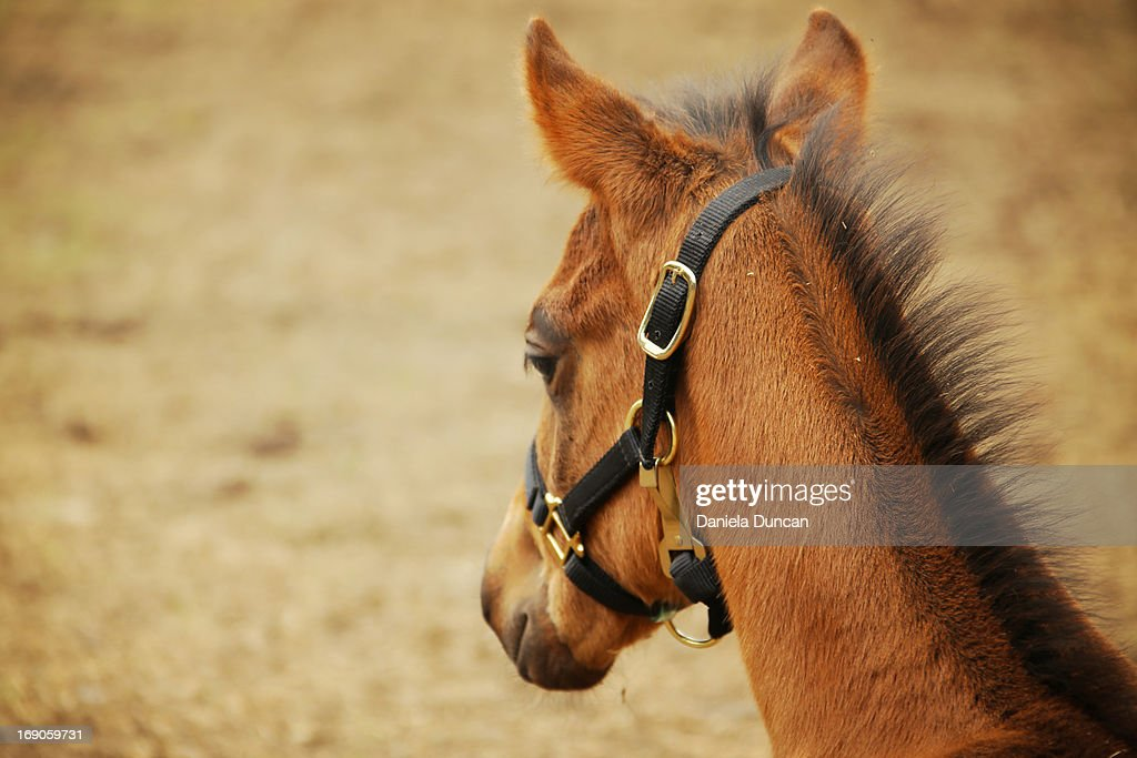 Young lonely horse : Stock Photo