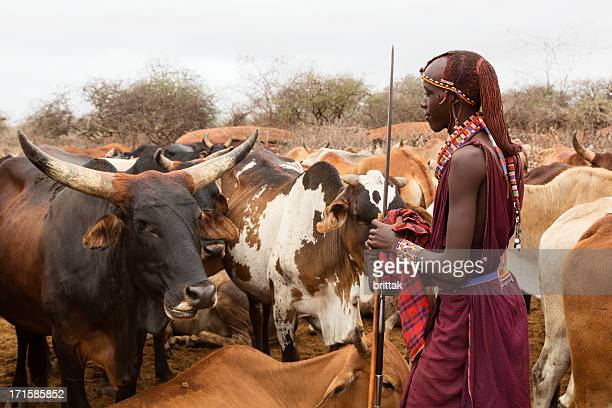 Young maasai warrior (morani) with cattle in village
