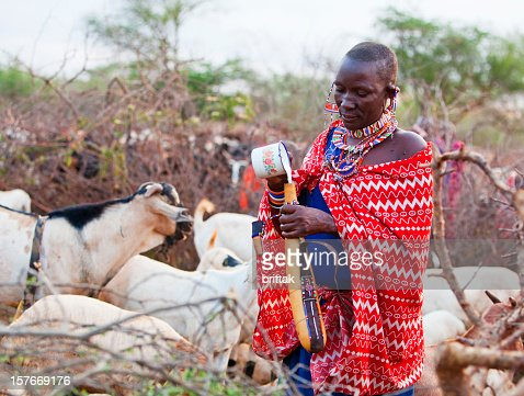 Young Maasai woman pouring goats milk into calabash : Stock Photo