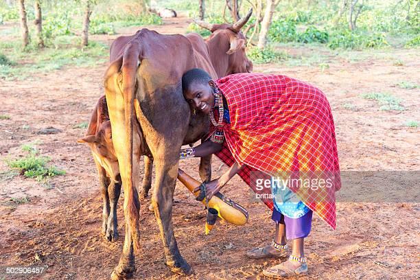 Young maasai woman with calabash milking cow.