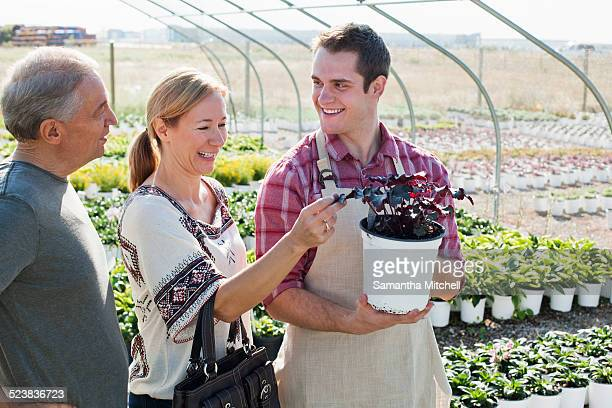 Young male horticulturalist advising customers on potted plant in plant nursery polytunnel