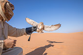 Young male pharaoh eagle owl (bubo ascalaphus) during a desert falconry show with a man dressed in traditional arab dress in Dubai, UAE.