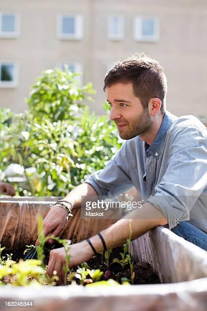 Young man gardening at urban garden