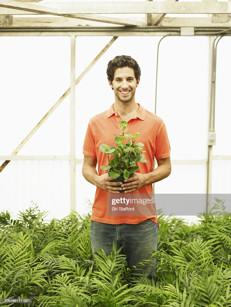 Young man holding potted plant in greenhouse : Stock Photo