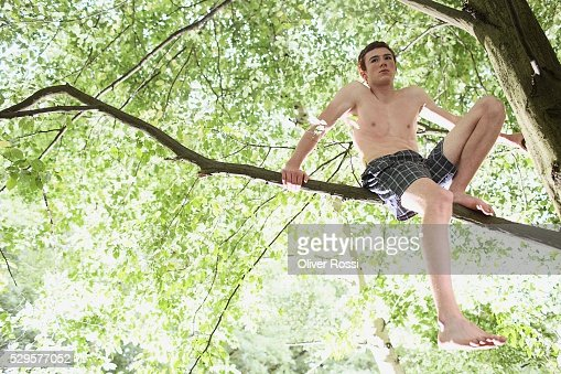 Young Man in a Tree : Photo