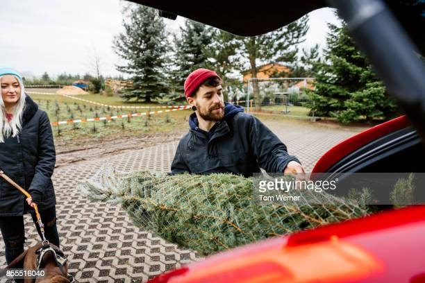 Young Man Loading Freshly Cut Down Christmas Tree Into Back Of His Car
