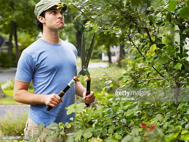 Young man pruning hedge