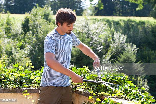 Young man pruning plants with pruner