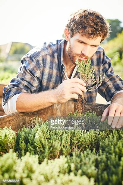 Young man smelling herbs at organic farm