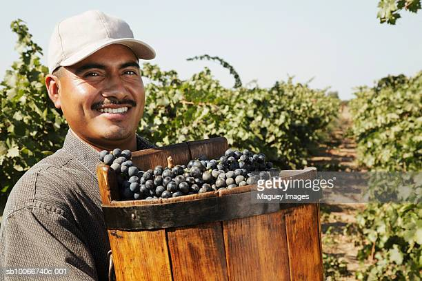 Young man smiling in vineyard field with grape harvest, portrait