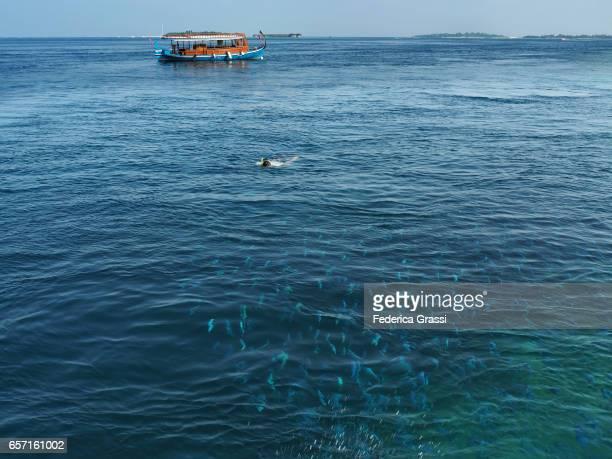 Young Man Swimming Towards Large School of Fish, Maldives