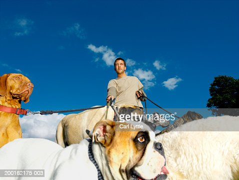 Young man walking group of dogs on leads, low angle view : Stock Photo