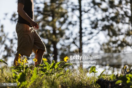 A young man walking through forest sunflowers : Stock Photo