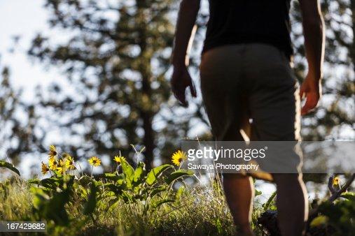 A young man walking through forest sunflowers : Foto de stock