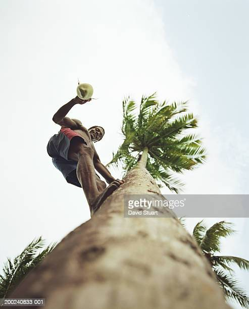 Young man with coconut in coconut palm tree, portrait, low angle view