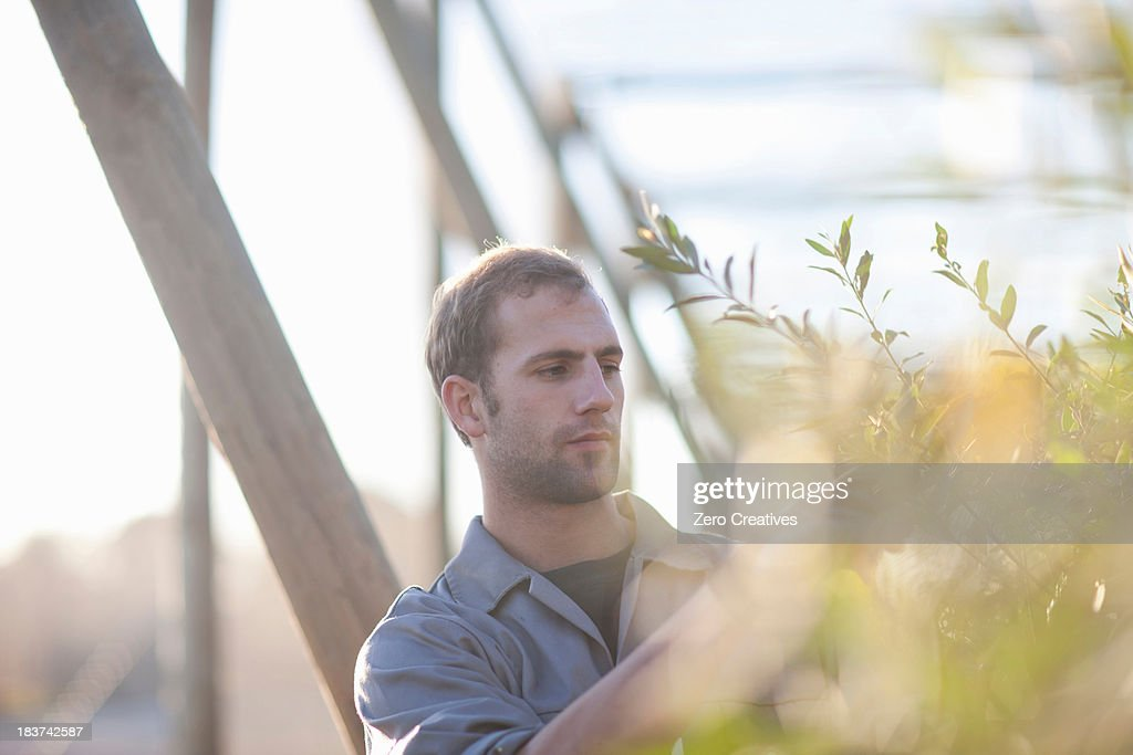 Young man working with plants