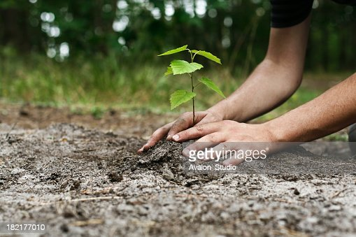 Young man's hands planting tree sapling