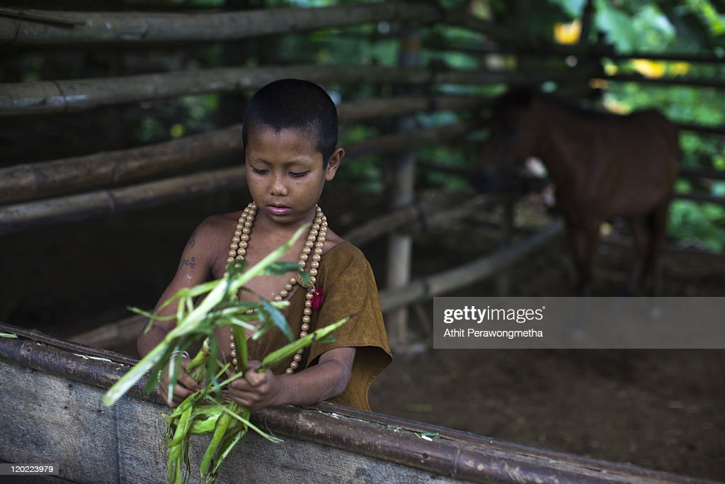 A young monk prepares food for horses at the Golden Horse Monastery (Wat Tam Pa Ar-Cha Thong) on August 1, 2011 in Chiang Rai, Thailand. The monastery, founded by former Thai boxing champion Phra Kru Ba Neua Chai who became a Buddhist monk , takes in destitute children, training them in equestrian skills on horses, many of which have been saved from slaughterhouses, and Thai boxing. .