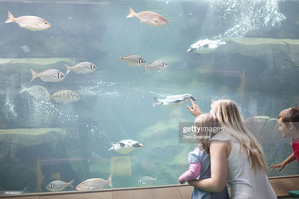 Young mother and two children watching penguins diving in aquarium