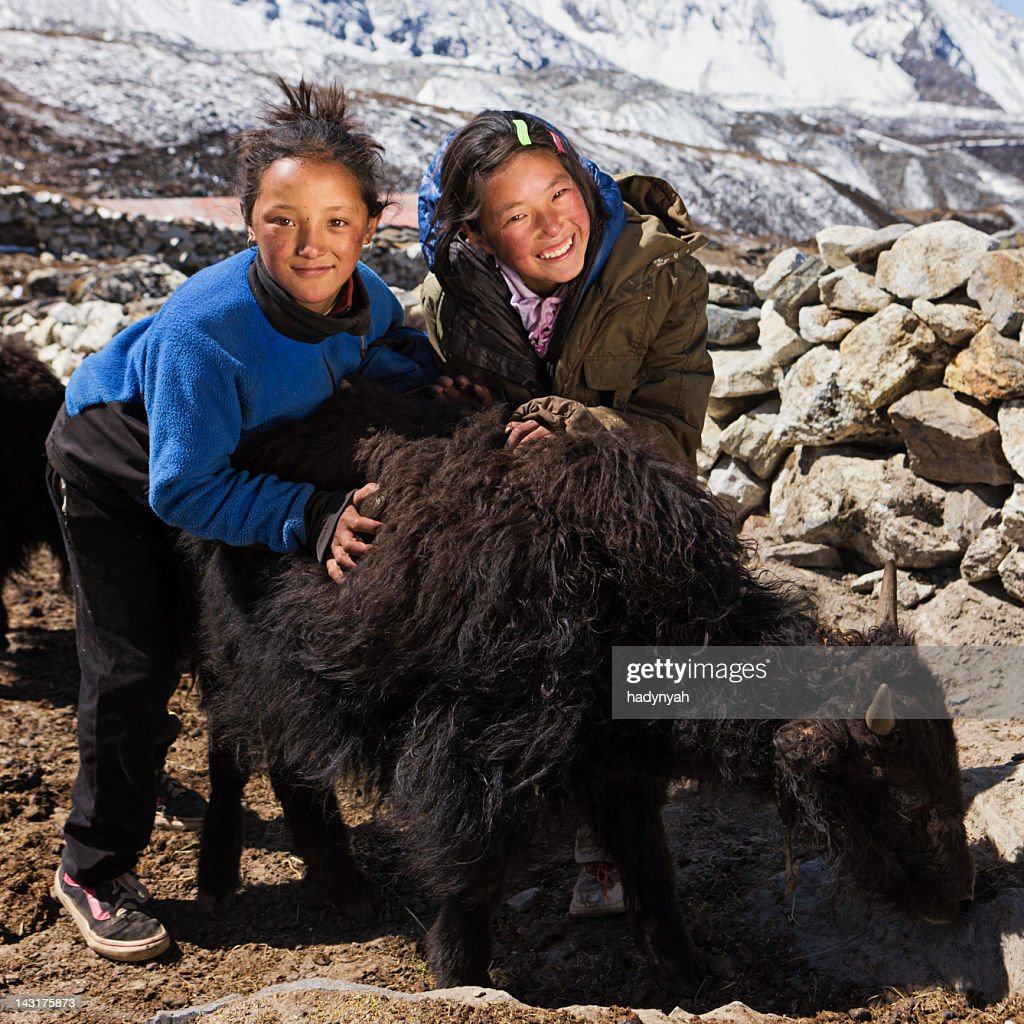 Young Nepali girls playing with yaks : Stock Photo