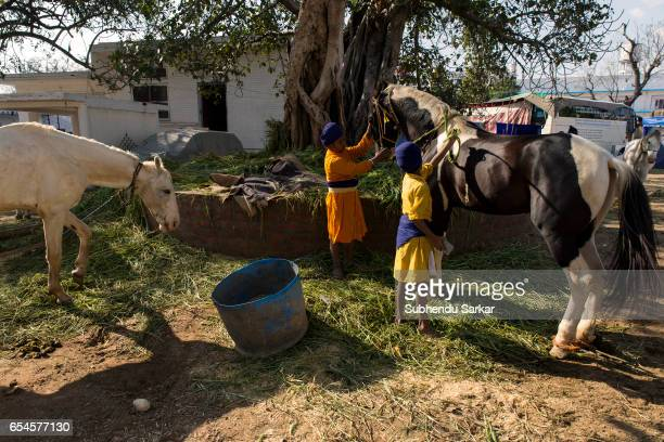Young Nihang Sikhs tend to their horses during Hola Mohalla festival Hola Mohalla is a threeday festival started by the tenth Sikh Guru Govind Singh...