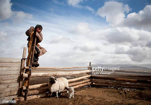 A young nomad climbs a fence to get a better view of his herd Mongolian pastoral herders make up one of the world's largest remaining nomadic...