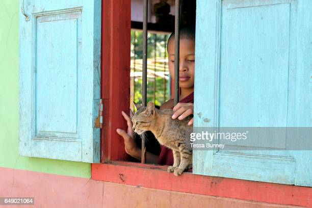 A young novice monk strokes a cat sitting at the window of a colourfully painted Buddhist temple in Kone Soth a Pa'O ethnic minority village in Kayah...