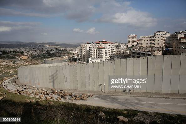 A young Palestinian shepherd leads his flock in front of Israel's controversial separation barrier near Shufat refugee camp and the settlement of...