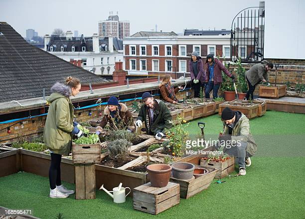 Young people tending plants in urban roof garden.
