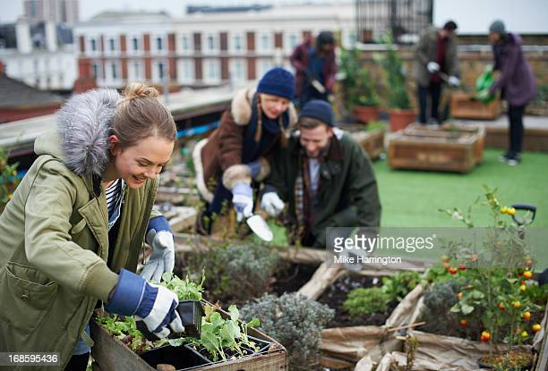 Young people working in urban roof garden.