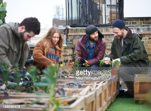 Young people working in urban roof garden. : Stock Photo