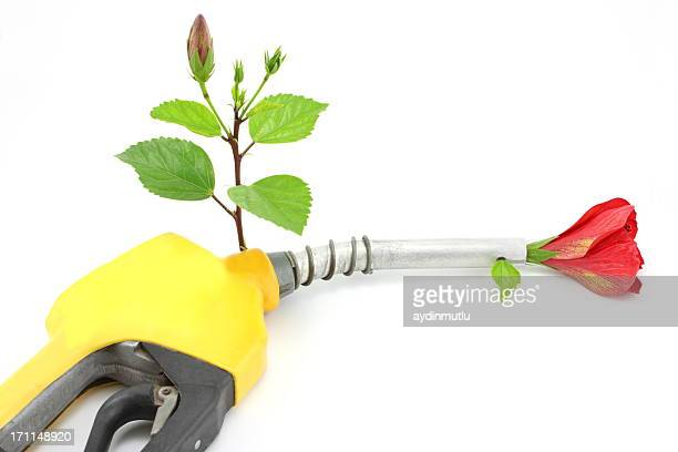 Young plant and a gas nozzle