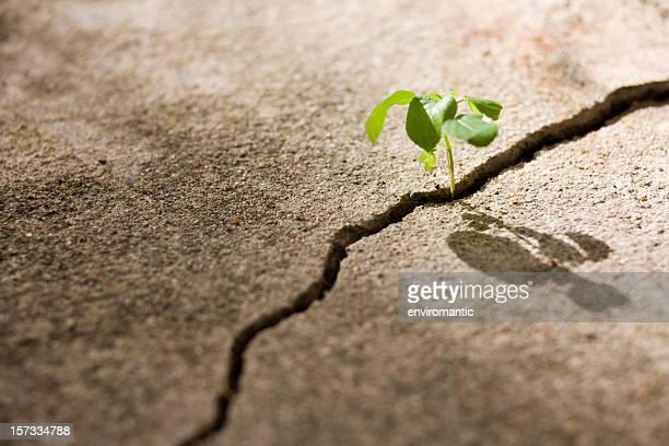若い植物の成長にクラックに、具体的な小道。