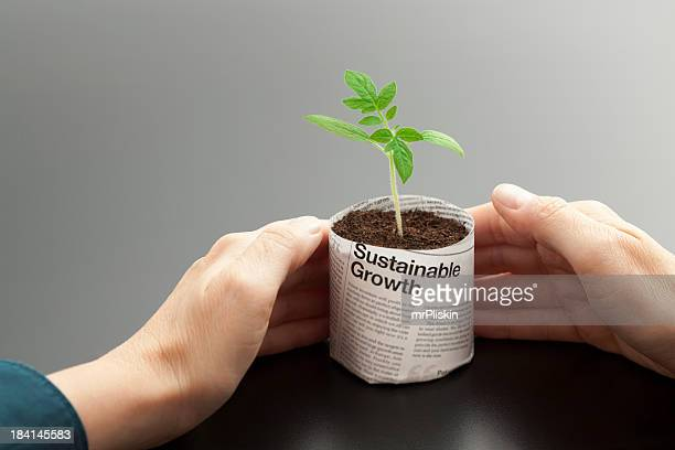 A young plant growing in a newspaper pot being held by hands