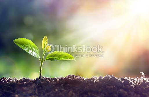 Young Plant Growing In Sunlight : Stock Photo