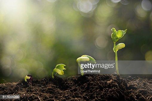 Giovane pianta in crescita nel mattino : Foto stock