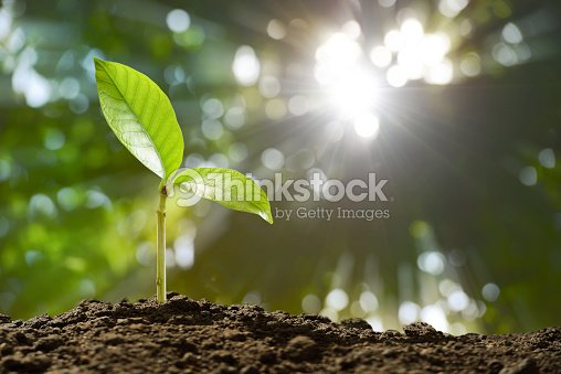 Young plant in the morning light on nature background : Stock Photo