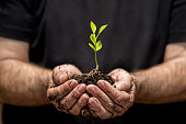 Young plant on soil in a hand of an farmer.