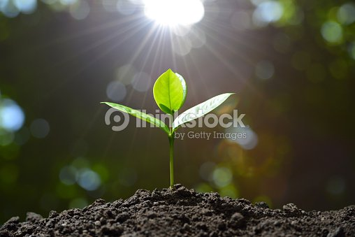 Young plant : Stock Photo
