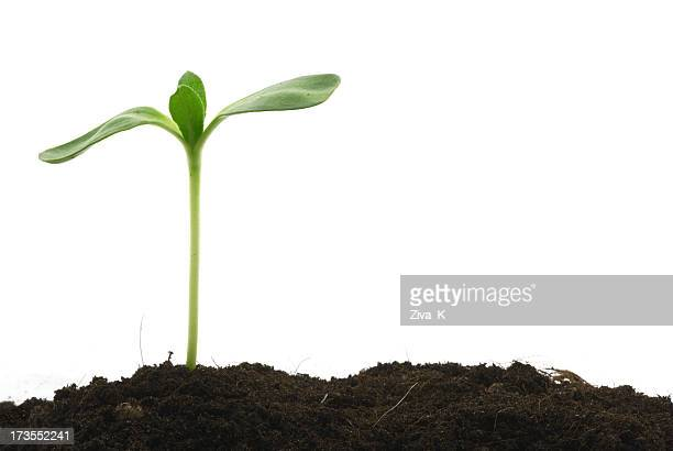 Young plant standing tall above the soil