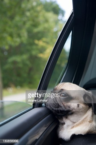 Commercial With Dog Driving Car With Puppy In Back Seat