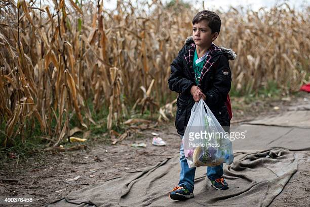 BORDER BAPSKA SYRMIA CROATIA Young refugee carries food while waiting to be able to cross the SerbianCroatian border More and more refugees arrive in...