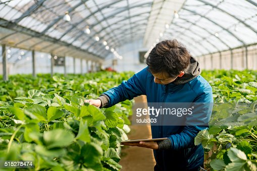 Young researcher with a tablet computer in a greenhouse