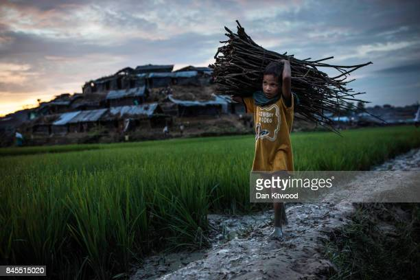 A young Rohingya refugees gathers firewood after arriving from Myanmar on September 10 2017 in Whaikhyang Bangladesh Recent reports have suggested...